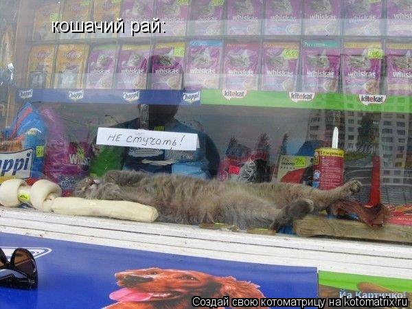 Котоматрица: кошачий рай: