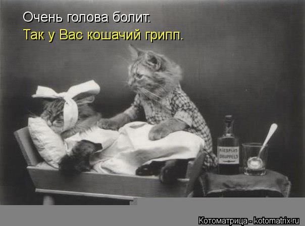 Котоматрица: Очень голова болит. Так у Вас кошачий грипп.