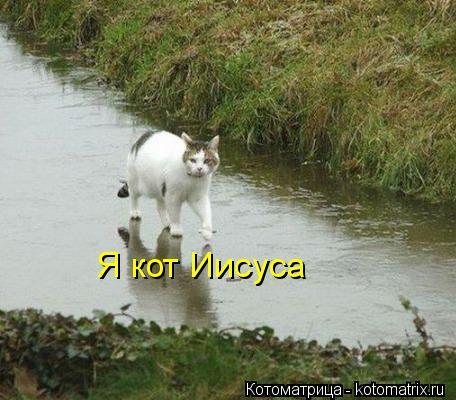 Котоматрица: Я кот Иисуса