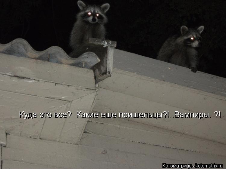 Котоматрица: Куда это все?  Какие еще пришельцы?!..Вампиры..?!