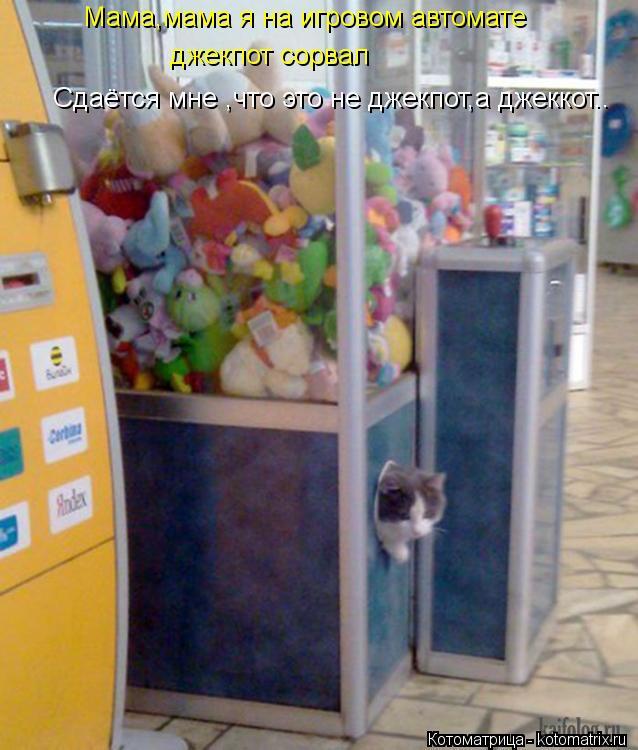 Котоматрица: Сдаётся мне ,что это не джекпот,а джеккот.. Мама,мама я на игровом автомате джекпот сорвал