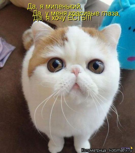 Котоматрица: Да, я миленький, Да, у меня красивые глаза, Да, я хочу ЕСТЬ!!!