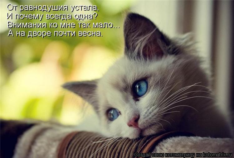 Котоматрица: От равнодушия устала, И почему всегда одна? Внимания ко мне так мало... А на дворе почти весна.