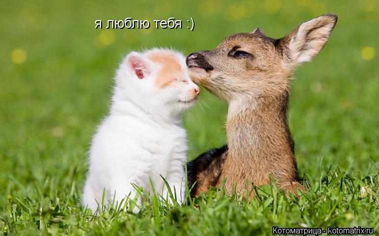 Котоматрица: я люблю тебя :)