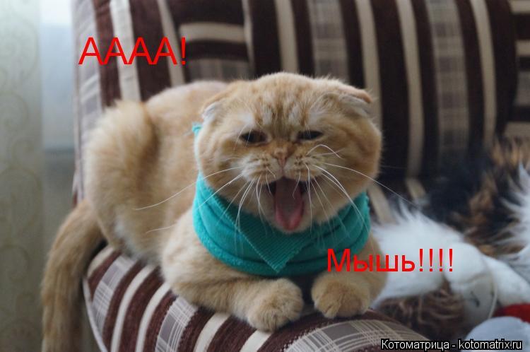 Котоматрица: Мышь!!!! АААА!