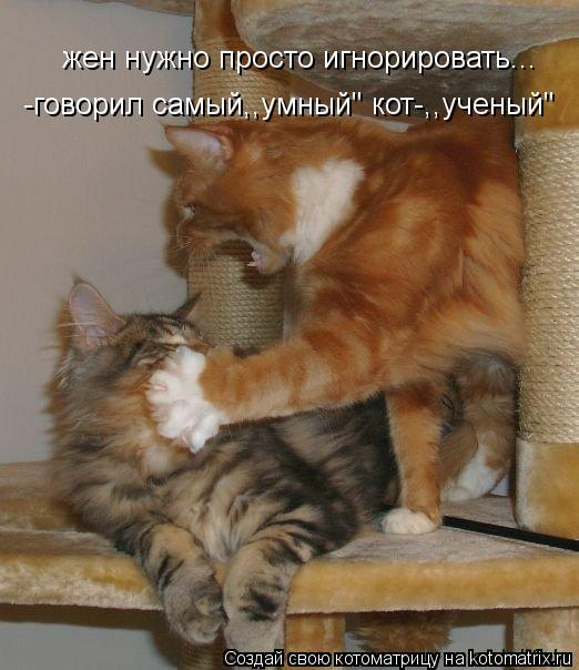 """Котоматрица: жен нужно просто игнорировать... -говорил самый,,умный"""" кот-,,ученый"""""""