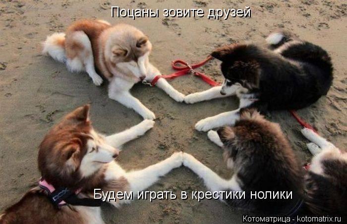 Котоматрица: Поцаны зовите друзей Будем играть в крестики нолики