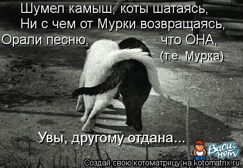 Котоматрица: Шумел камыш, коты шатаясь, (т.е. Мурка) Увы, другому отдана... Ни с чем от Мурки возвращаясь, Орали песню,                  что ОНА,