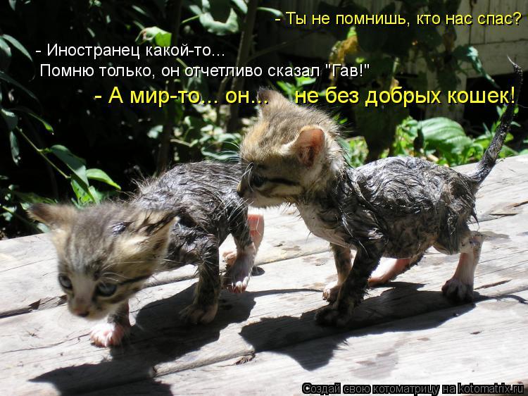 """Котоматрица: - Ты не помнишь, кто нас спас? - А мир-то... он...    не без добрых кошек! - Иностранец какой-то... Помню только, он отчетливо сказал """"Гав!"""""""