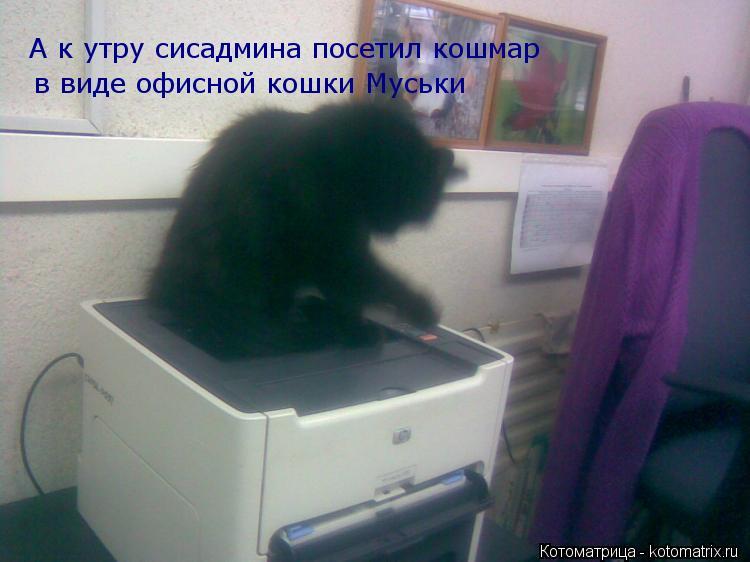 Котоматрица: А к утру сисадмина посетил кошмар в виде офисной кошки Муськи