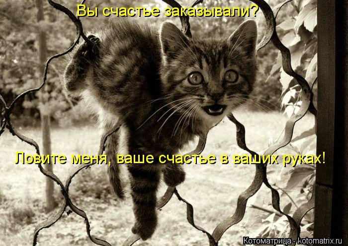 Котоматрица: Вы счастье заказывали?  Ловите меня, ваше счастье в ваших руках!