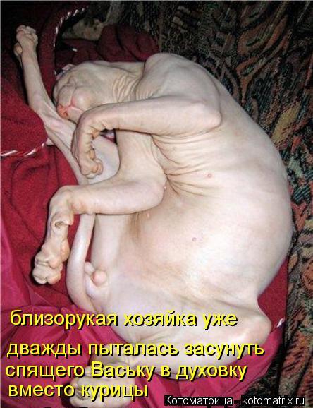 Котоматрица: близорукая хозяйка уже дважды пыталась засунуть спящего Ваську в духовку вместо курицы