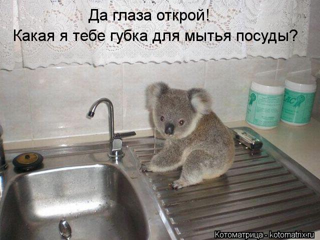 Котоматрица: Да глаза открой! Какая я тебе губка для мытья посуды?