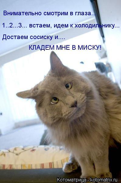 Котоматрица: Внимательно смотрим в глаза... 1..2...3... встаем, идем к холодильнику... Достаем сосиску и.... КЛАДЕМ МНЕ В МИСКУ!