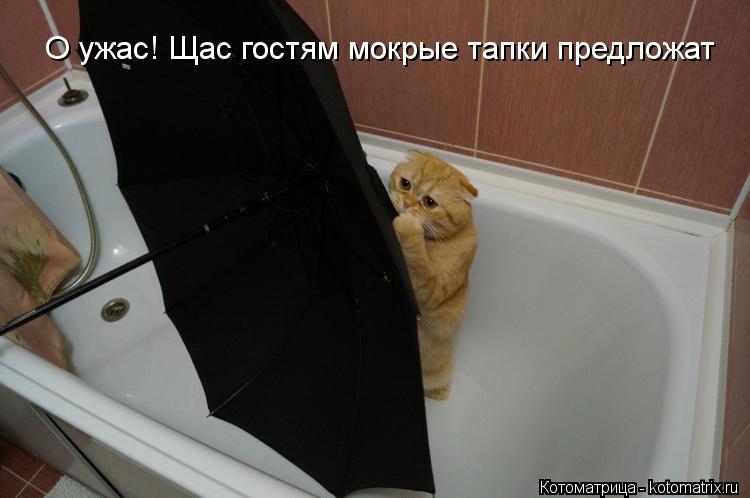 Котоматрица: О ужас! Щас гостям мокрые тапки предложат