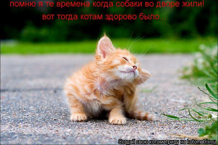 Котоматрица: помню я те времена когда собаки во дворе жили! вот тогда котам здорово было...