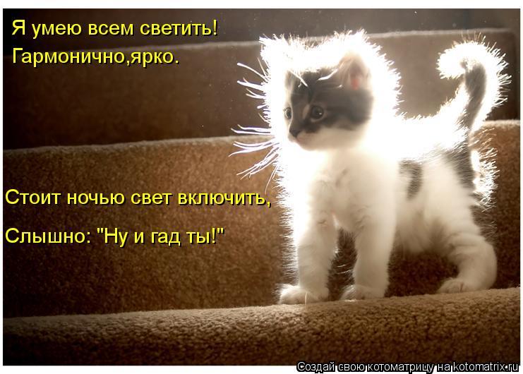 """Котоматрица: Я умею всем светить! Гармонично,ярко. Стоит ночью свет включить, Слышно: """"Ну и гад ты!"""""""