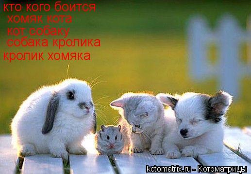 Котоматрица: кто кого боится хомяк кота кот собаку собака кролика кролик хомяка