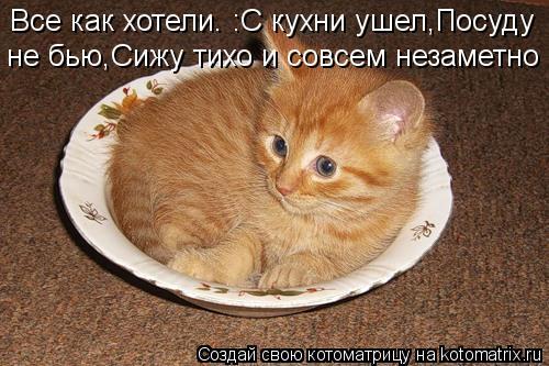 Котоматрица: Все как хотели. :С кухни ушел,Посуду  не бью,Сижу тихо и совсем незаметно