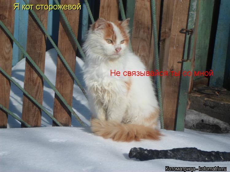 Котоматрица: Я кот сторожевой Не связывайся ты со мной