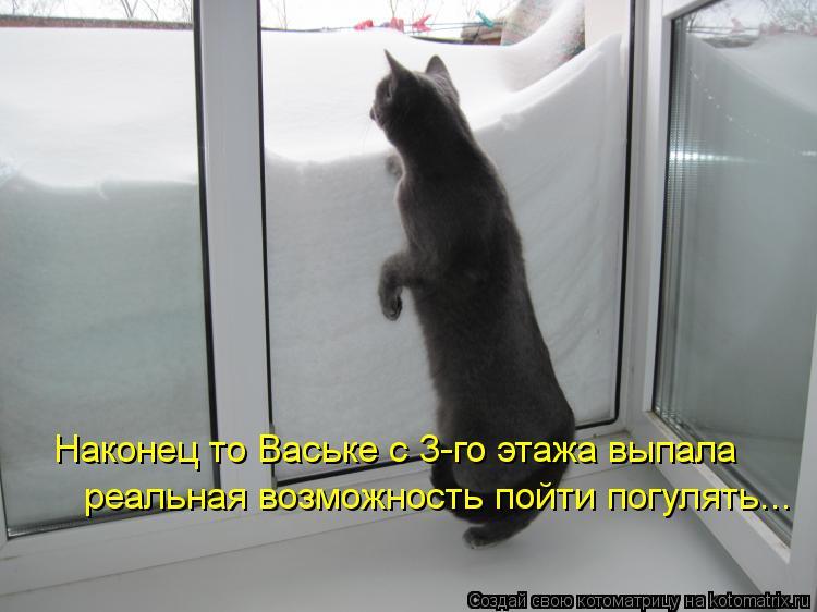 Котоматрица: Наконец то Ваське с 3-го этажа выпала  реальная возможность пойти погулять...