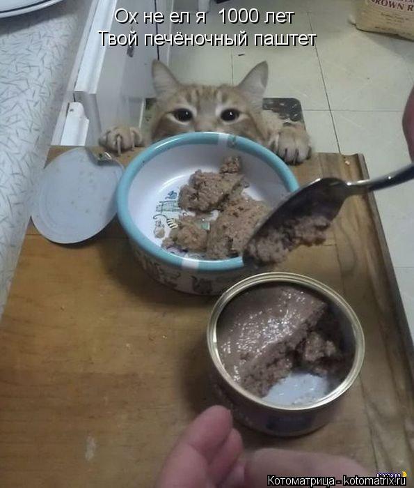 Котоматрица: Ох не ел я  1000 лет Твой печёночный паштет