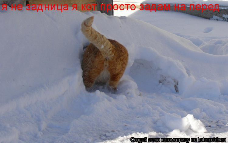 Котоматрица: я не задница я кот просто задам на перед