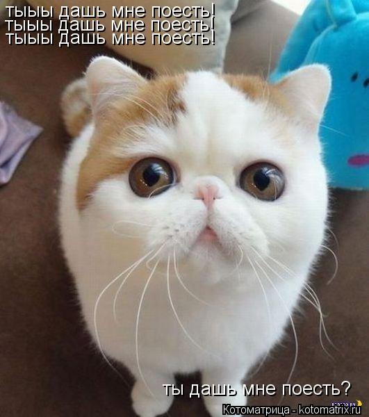 Котоматрица: тыыы дашь мне поесть! тыыы дашь мне поесть! тыыы дашь мне поесть! ты дашь мне поесть?