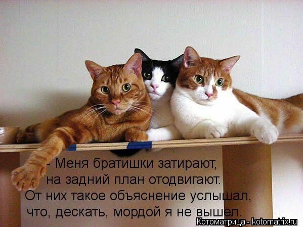 Котоматрица: - Меня братишки затирают, на задний план отодвигают. От них такое объяснение услышал, что, дескать, мордой я не вышел.