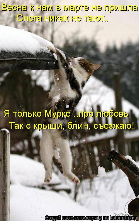 Котоматрица: Весна к нам в марте не пришла Снега никак не тают.. Я только Мурке ..про любовь Так с крыши, блин, съезжаю!