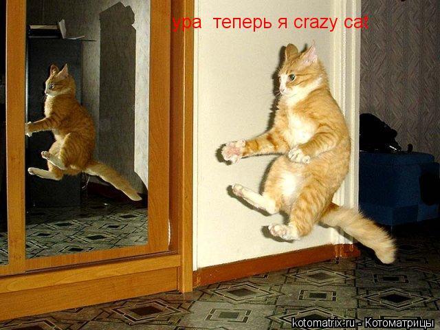 Котоматрица: ура  теперь я crazy cat