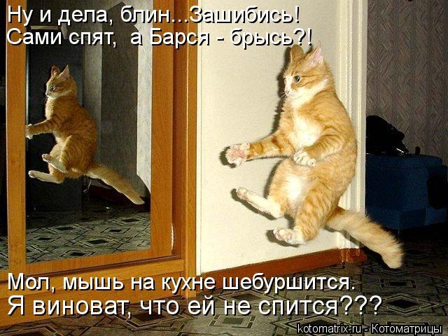 Котоматрица: Ну и дела, блин...Зашибись!  Сами спят,  а Барся - брысь?! Мол, мышь на кухне шебуршится. Я виноват, что ей не спится???