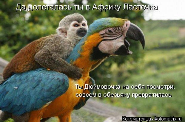Котоматрица: Да,долеталась ты в Африку Ласточка Ты Дюймовочка на себя посмотри, совсем в обезьяну превратилась