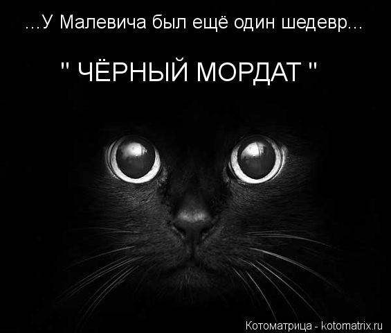 """Котоматрица: ...У Малевича был ещё один шедевр... """" ЧЁРНЫЙ МОРДАТ """""""