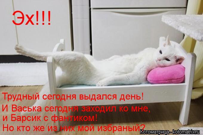 Котоматрица: Трудный сегодня выдался день! Эх!!! И Васька сегодня заходил ко мне, и Барсик с фантиком! Но кто же из них мой избраный?