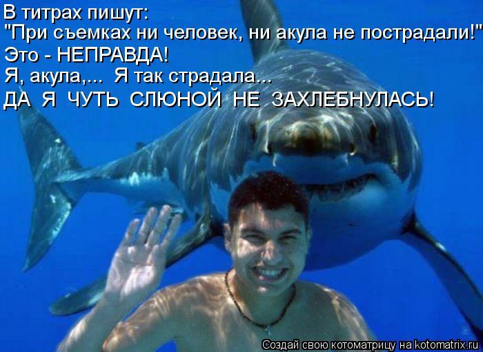 """Котоматрица: """"При съемках ни человек, ни акула не пострадали!"""" Это - НЕПРАВДА! Я, акула,...  Я так страдала... ДА  Я  ЧУТЬ  СЛЮНОЙ  НЕ  ЗАХЛЕБНУЛАСЬ!  В титрах пиш"""