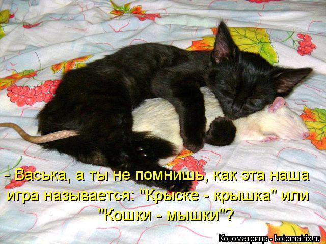 """Котоматрица: - Васька, а ты не помнишь, как эта наша игра называется: """"Крыске - крышка"""" или """"Кошки - мышки""""?"""