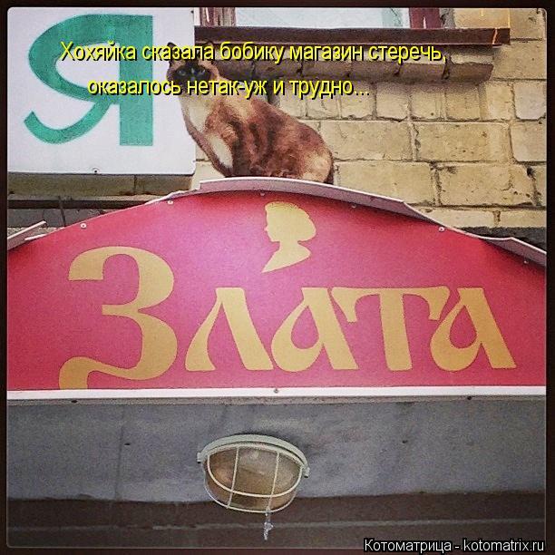 Котоматрица: Хохяйка сказала бобику магазин стеречь, оказалось нетак-уж и трудно...