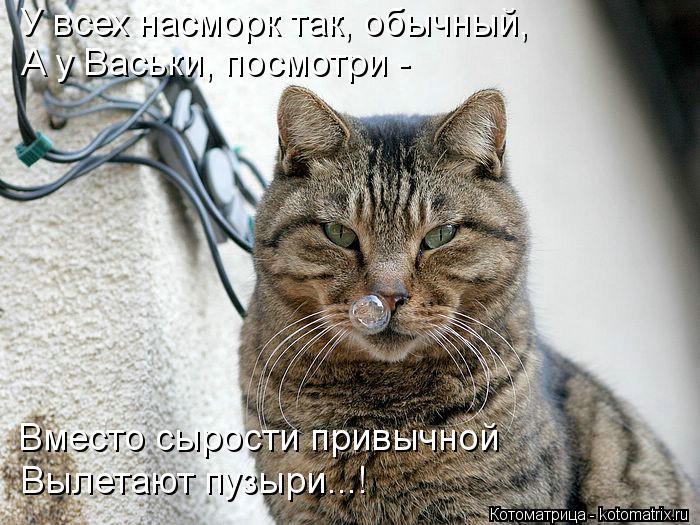 Котоматрица: У всех насморк так, обычный, А у Васьки, посмотри -  Вместо сырости привычной Вылетают пузыри...!
