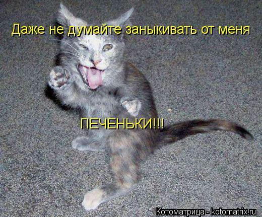 Котоматрица: Даже не думайте заныкивать от меня ПЕЧЕНЬКИ!!!