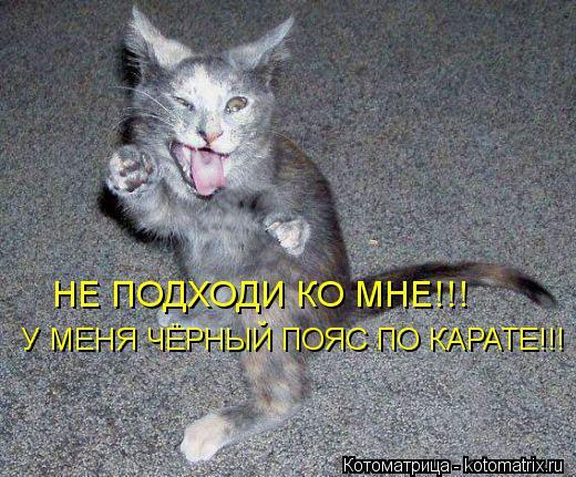 Котоматрица: НЕ ПОДХОДИ КО МНЕ!!! У МЕНЯ ЧЁРНЫЙ ПОЯС ПО КАРАТЕ!!!