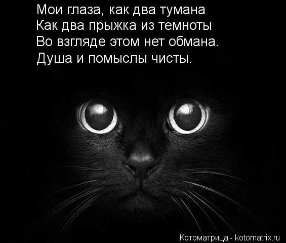 Котоматрица: Мои глаза, как два тумана Как два прыжка из темноты Во взгляде этом нет обмана. Душа и помыслы чисты.