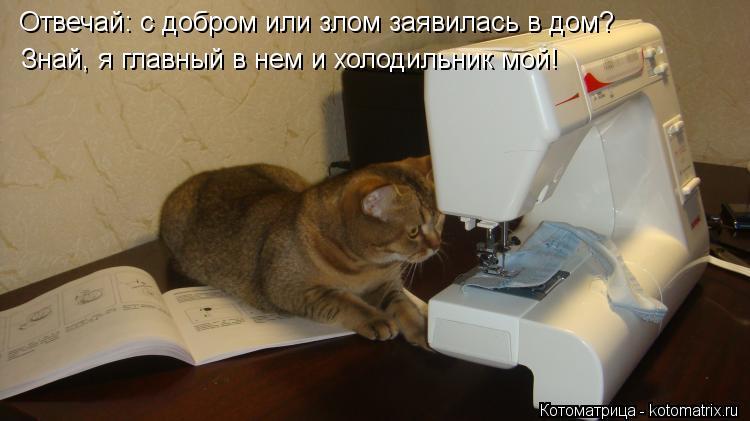 Котоматрица: Отвечай: с добром или злом заявилась в дом? Знай, я главный в нем и холодильник мой!