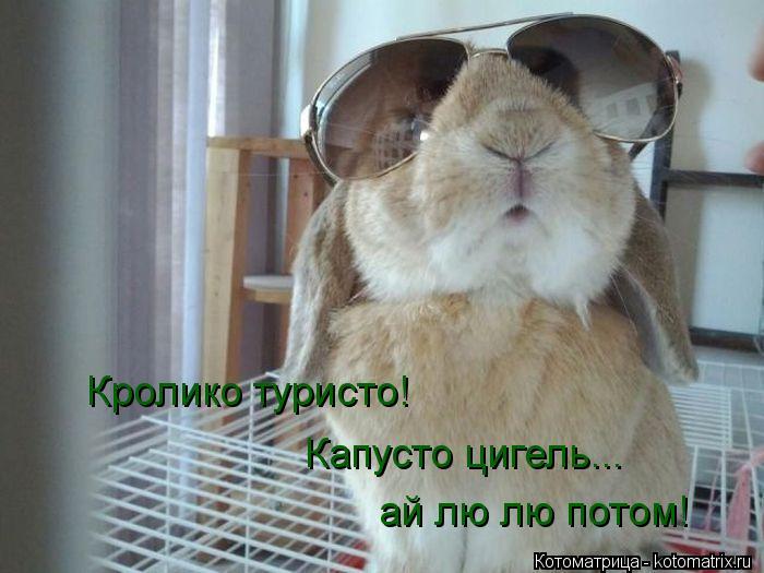 Котоматрица: Кролико туристо! Капусто цигель...  ай лю лю потом!