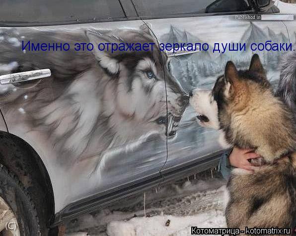 Котоматрица: Именно это отражает зеркало души собаки.
