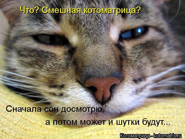 Котоматрица: Что? Смешная котоматрица? Сначала сон досмотрю, а потом может и шутки будут... Сначала сон досмотрю,  а потом может и шутки будут...