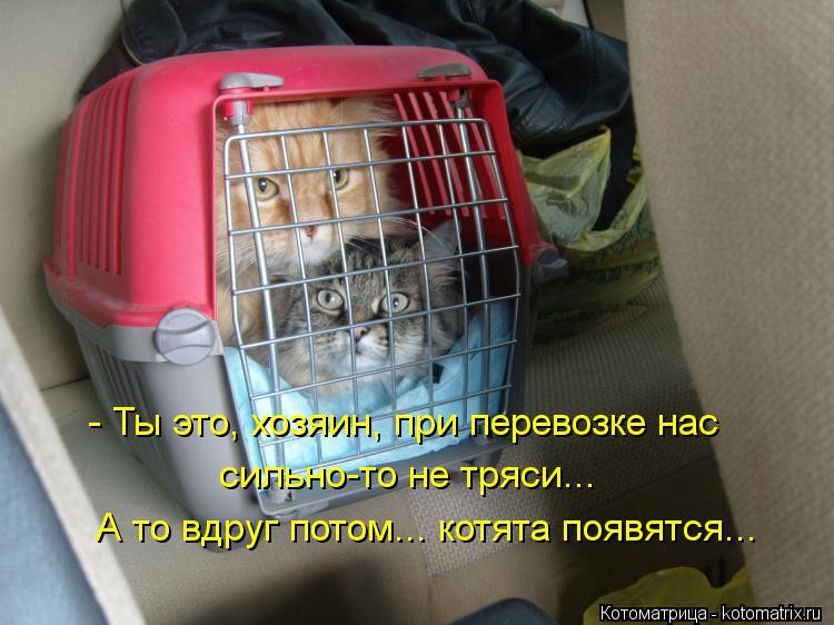 Котоматрица: - Ты это, хозяин, при перевозке нас сильно-то не тряси... А то вдруг потом... котята появятся...