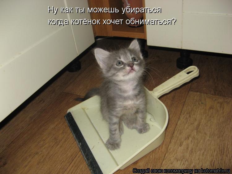 Котоматрица: Ну как ты можешь убираться  когда котёнок хочет обниматься?