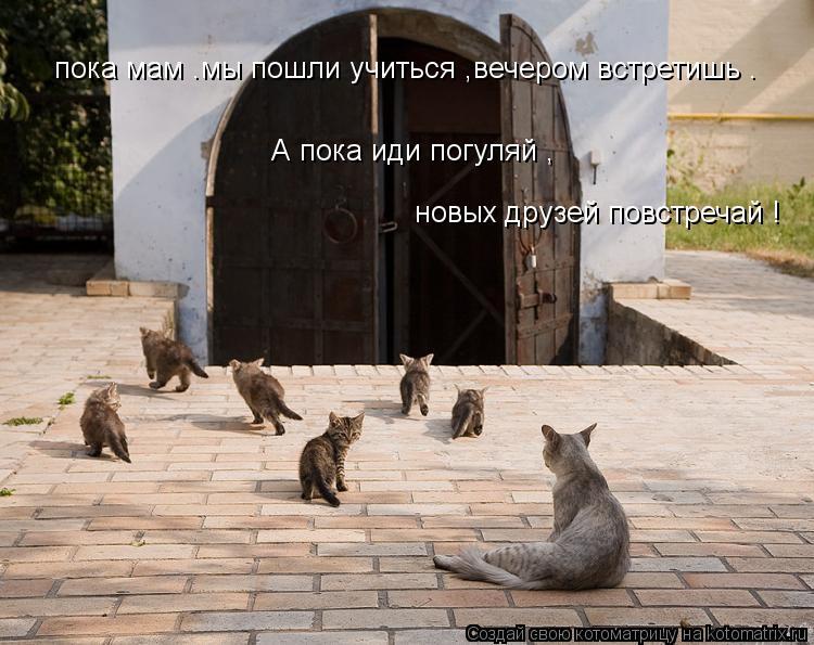 Котоматрица: пока мам .мы пошли учиться ,вечером встретишь . А пока иди погуляй , новых друзей повстречай !