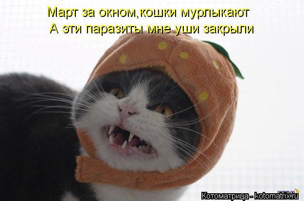 Котоматрица: Март за окном,кошки мурлыкают А эти паразиты мне уши закрыли